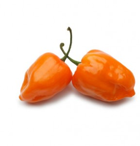 HABANERO CHILE PEPPER