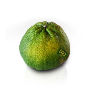 UGLI® FRUIT