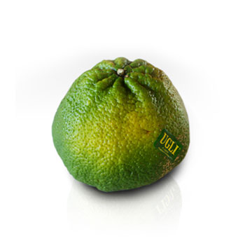 UGLI® FRUIT